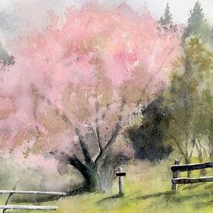 八重桜をスケッチ