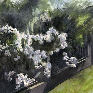 水彩画 白い花の生け垣