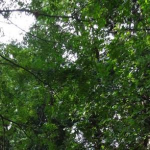六義園 / Rikugien Park