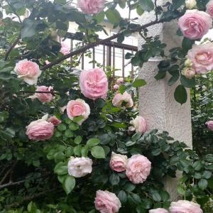 The Rose Garden  京成バラ園