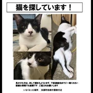 愛知県 扶桑町 猫 迷子