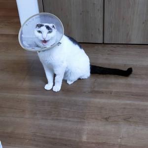 迷子 猫 扶桑町