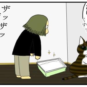 猫「究極魔法:飼い主☆召喚!!!」