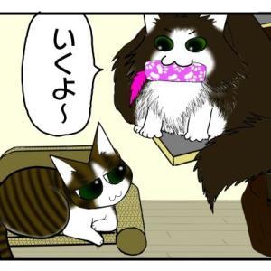 姉猫のために枕をとってあげる猫【ノルウェージャンフォレストキャット】