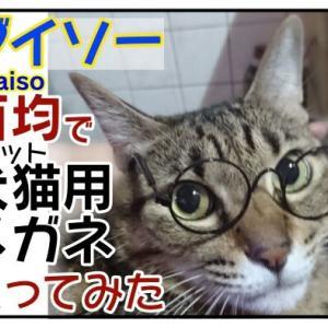 【百均】ダイソーで犬猫用メガネ買ってみた!【Daiso】