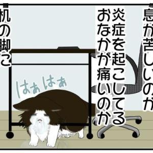 マーたん闘病記13 闘病中に一番キツかった時期【うちの猫闘病中!】