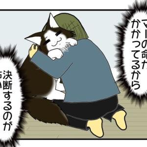 マーたん闘病記17 セカンドオピニオン!診断結果がまっぷたつ【うちの猫闘病中!】
