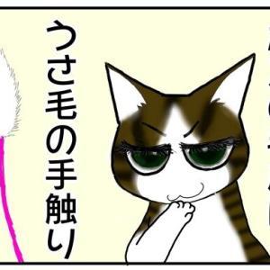 【三者三様】我が家の3匹の猫、3匹いて3匹とも毛皮のタイプが違う。