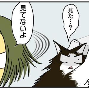 失敗を隠したい猫と、見てしまった飼い主