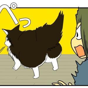 両成敗な猫