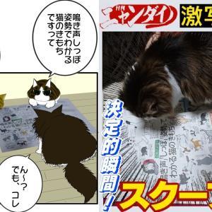 【日刊ニャンダイ】決定的瞬間!激写スクープ【猫新聞を読む猫】