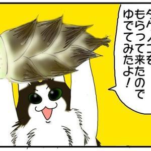 【旬の味覚】タケノコをもらったので、ゆでてみたよ!