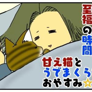 飼い主【至福の時間】甘え猫と腕枕でおやすみ