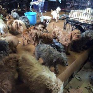 犬猫の飼育・繁殖に制限 ペット業者規制、環境省方針の決定