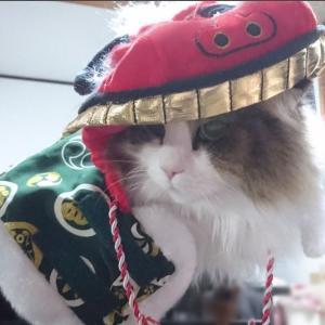 【マザーガーデン】4500円獅子舞ペット用衣装【ペットパラダイス】