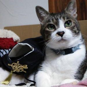 【百均】ペット用晴れ着にちょい足し!華やかカスタム