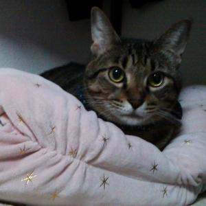 カインズの新作猫用寝袋を取り合う猫たち