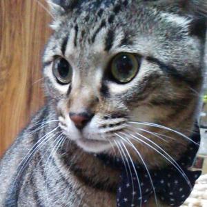 同一猫(ニャン)物には見えない 【猫の日】