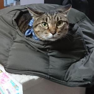 猫「ダウンベストぬくい」