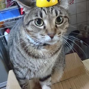 【にゃんコス】現場猫になってみた