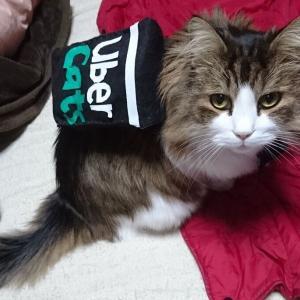 百均フェルトで Uver Cats【猫コス】【Uver Eats】