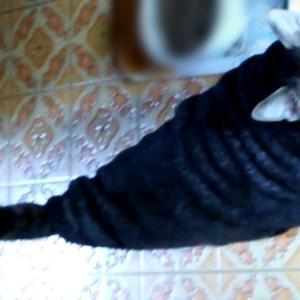 平成最後の毛布猫