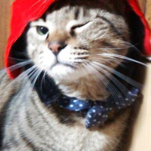 猫用兜でGO!GO!子供の日コスプレ
