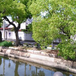 自分という木の育て方 石村由起子著              大阪宣言解除 3日目。