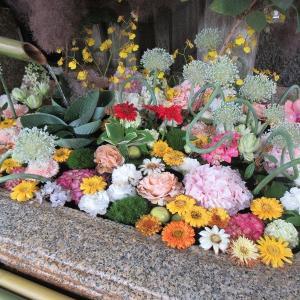 北野天満宮(京都市上京区) ①見た目も涼しく美しい「花手水」は6月いっぱい