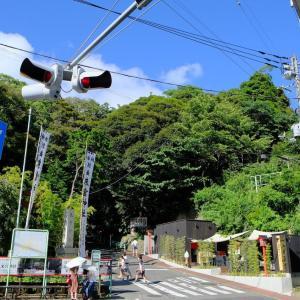 御朱印15 来宮神社@熱海 日本で二番目に大きい御神木大楠!