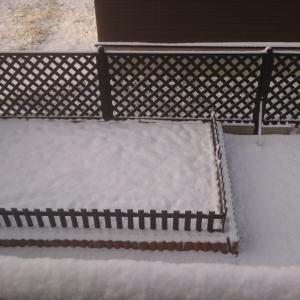 遂に雪が積もった!