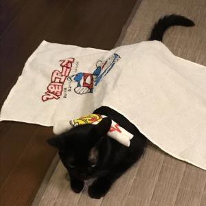猫愛ブギー