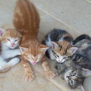 ☆ 驚異!子猫の学習能力 ☆