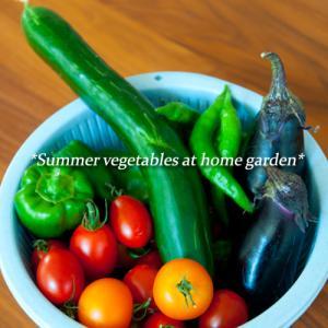 家庭菜園の野菜を食べる♪