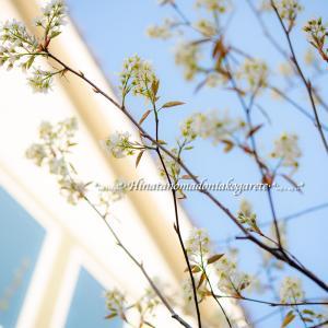 GWと春の庭