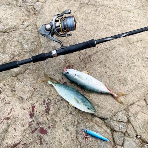 2020初釣行!江ノ島でワカシ釣れまくる!ライトショアジングで入れ食い‼︎   20ツインパワー
