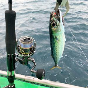片瀬江ノ島・島きち丸のLTルアーに乗船!サバぽちぽち釣れる‼︎ 20ツインパワー5000 釣果