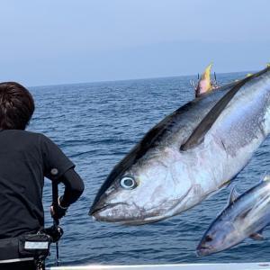 相模湾のキハダマグロ・カツオ釣りで使うルアーの選び方、おすすめのルアー6種類|ペンシル