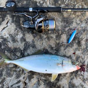 2020/8 江ノ島・裏磯でイナダ級のワカシとサバをダイソーの100円メタルジグでを釣ってみた