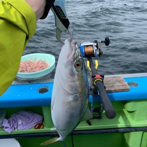 2020・東京湾のワラサ釣り|田村亮さんが釣りの撮影にきてたよ! 一ノ瀬丸