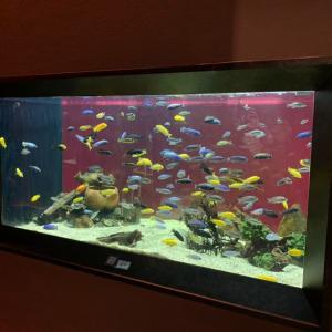 川崎水族館の見所を紹介Part2 ピラルクー、ピラニア、肺魚、カピバラ登場