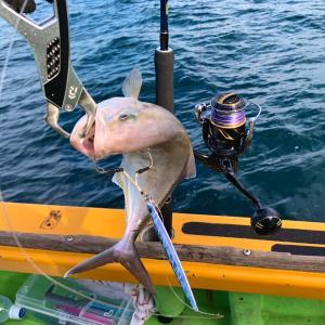東京湾・青物ジギングでカンパチとホウボウを釣る、渡辺釣船店・釣果・2020 20ステラSW