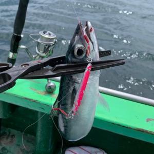 相模湾LTルアー(ライトジギング)でサバとワカシ入れ食い! 島きち丸 2021 釣果