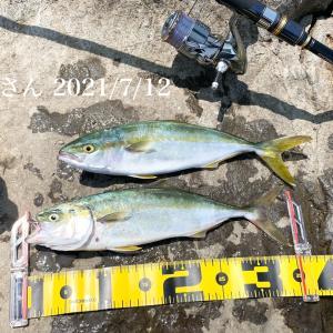 江ノ島で30cm以上のワカシが好調!ライトショアジギングで12匹! 2021 釣果