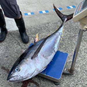 【相模湾】コマセキハダ(マグロ)・カツオの釣り方・タックルを解説 竿 リール ライン 仕掛け