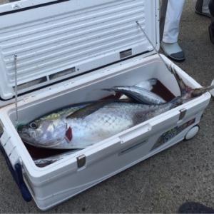 キハダマグロ・カツオ釣りにおすすめクーラーボックス5選 入る魚サイズ