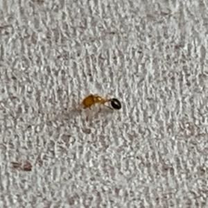 家に侵入してくるアリの種類と原因・対策・駆除方法|安全にアリを撃退しよう 蟻