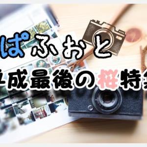 パパフォト!#7『平成最後の桜特集』