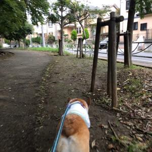 ロング夕散歩