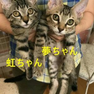 11月10日(日)譲渡会報告② 参加猫編